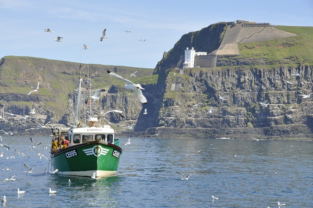 RATHLIN ISLAND SEAGULLS AROUND FISHING BOAT