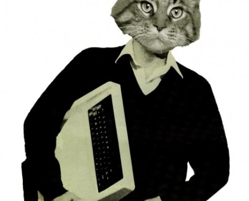 joe skinners cat