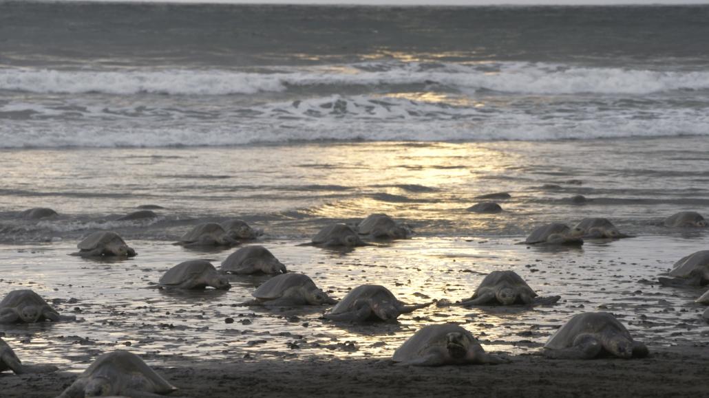 Sunset on turtle beach...